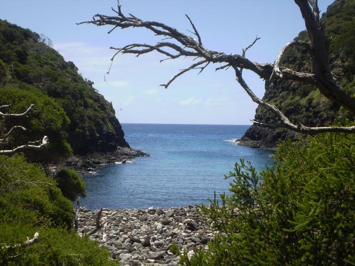 Old Gulch Lord Howe Island